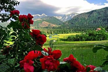 Róże i góry2